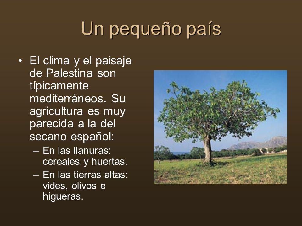 Un pequeño país El clima y el paisaje de Palestina son típicamente mediterráneos. Su agricultura es muy parecida a la del secano español: