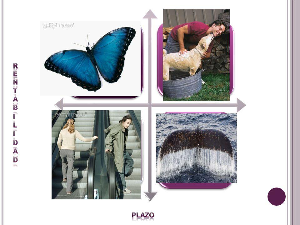 Mariposa Verdaderos amigos Extraños Percebes rentabilidad Plazo