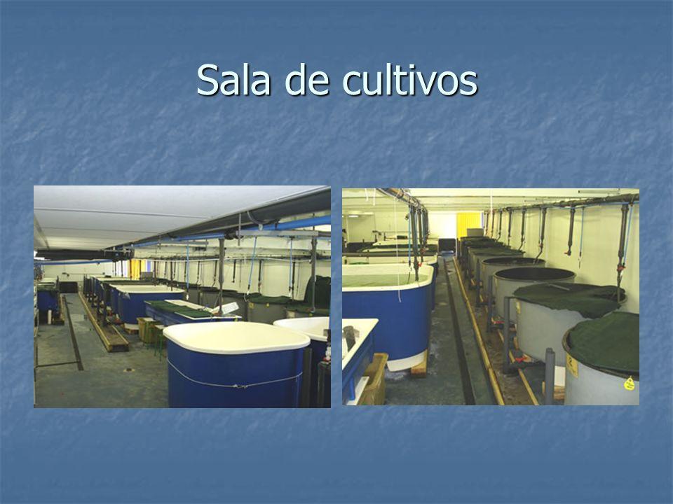 Sala de cultivos