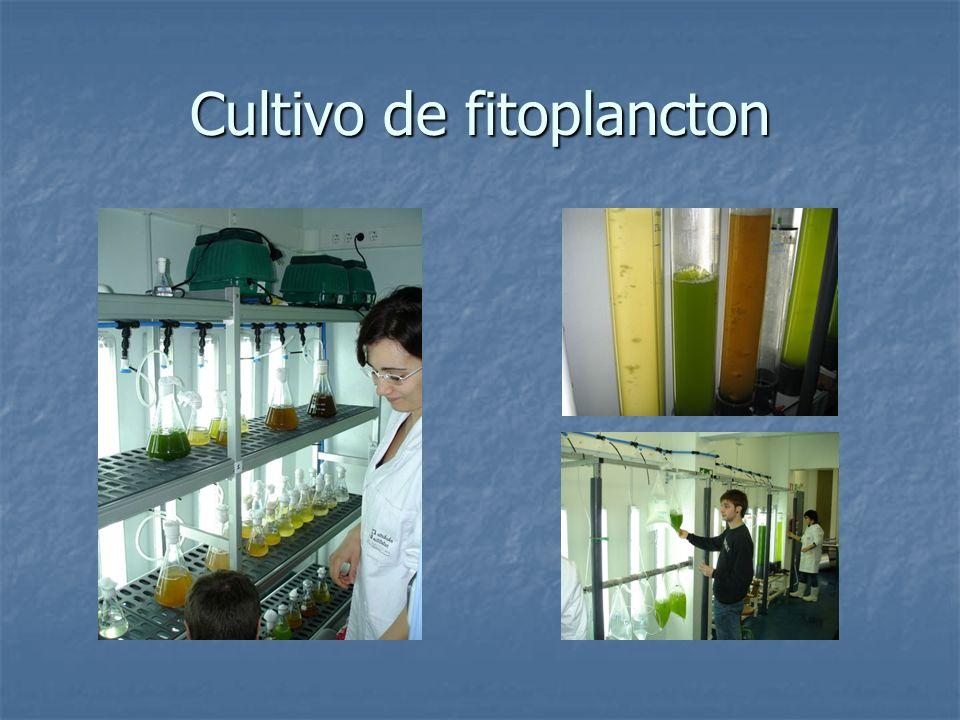 Cultivo de fitoplancton