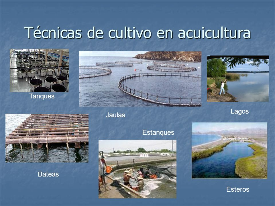 Técnicas de cultivo en acuicultura