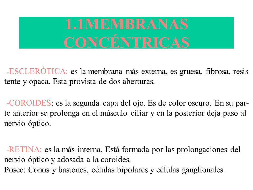 1.1MEMBRANAS CONCÉNTRICAS