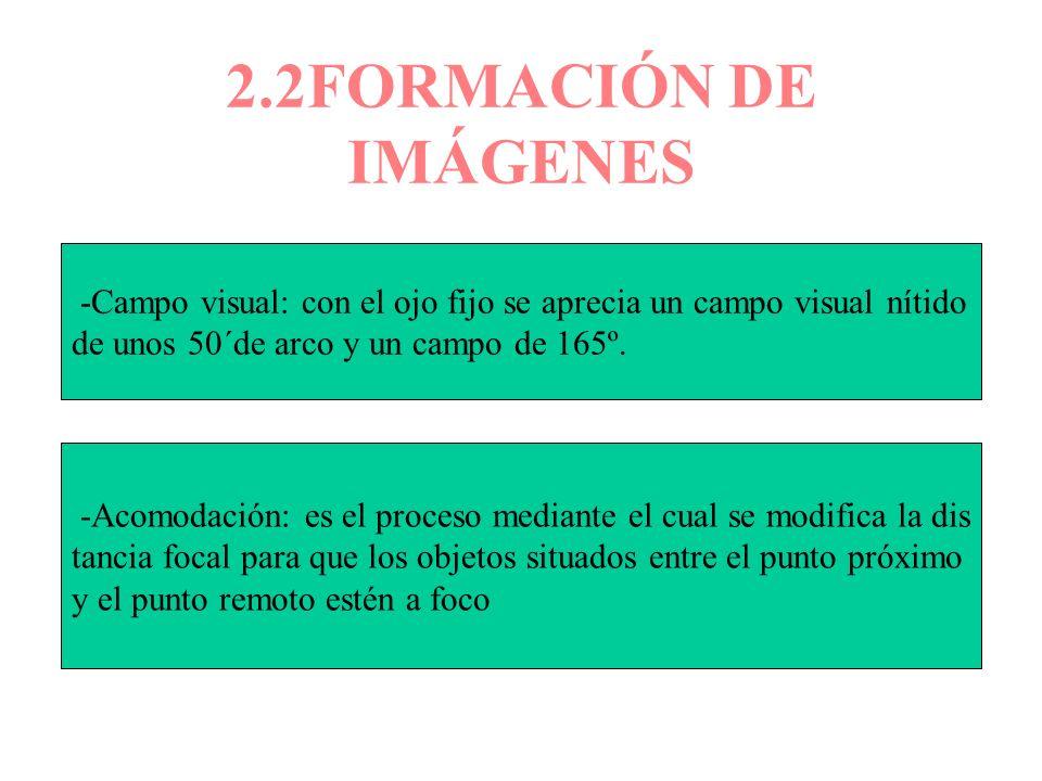 2.2FORMACIÓN DE IMÁGENES -Campo visual: con el ojo fijo se aprecia un campo visual nítido. de unos 50´de arco y un campo de 165º.