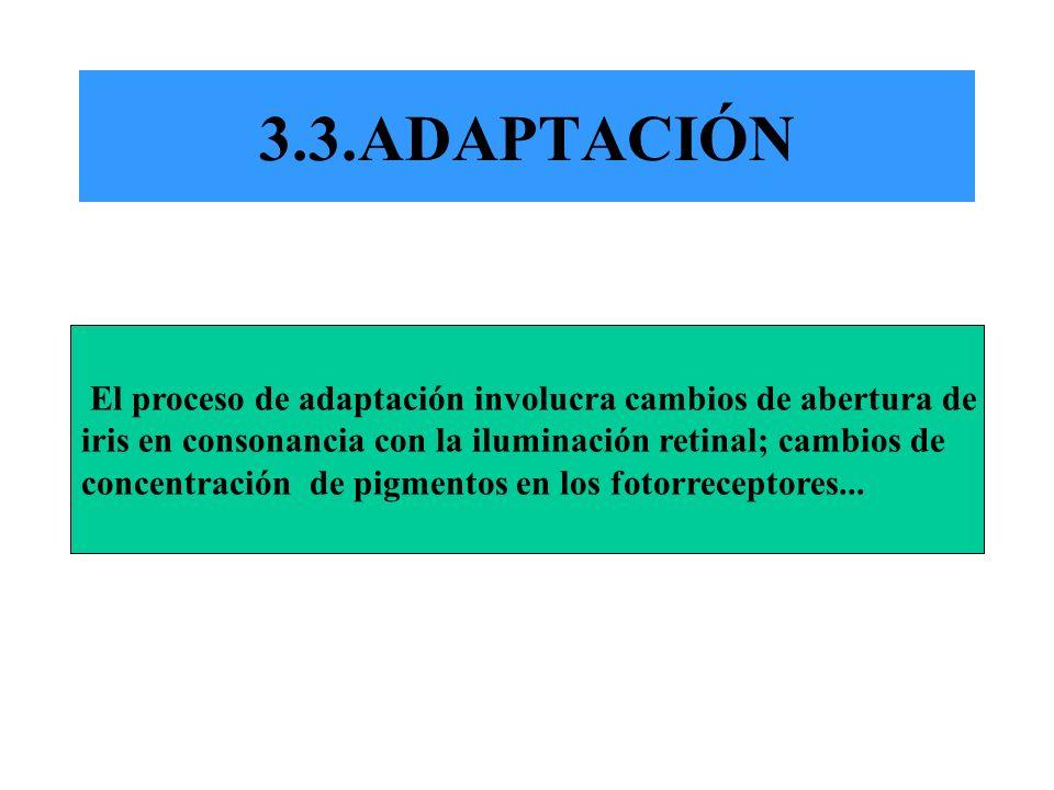 3.3.ADAPTACIÓN El proceso de adaptación involucra cambios de abertura de. iris en consonancia con la iluminación retinal; cambios de.