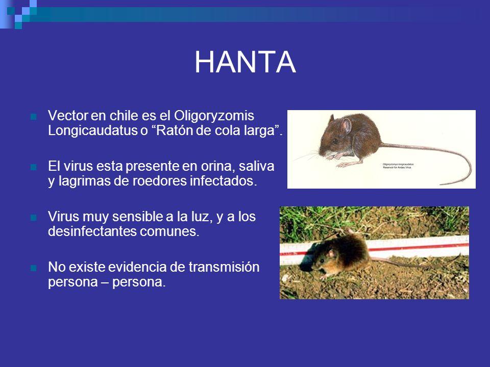HANTA Vector en chile es el Oligoryzomis Longicaudatus o Ratón de cola larga .