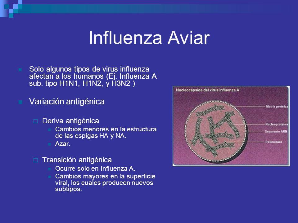 Influenza Aviar Variación antigénica
