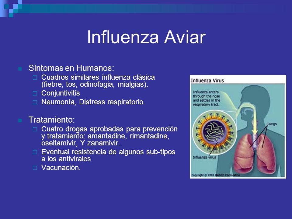 Influenza Aviar Síntomas en Humanos: Tratamiento: