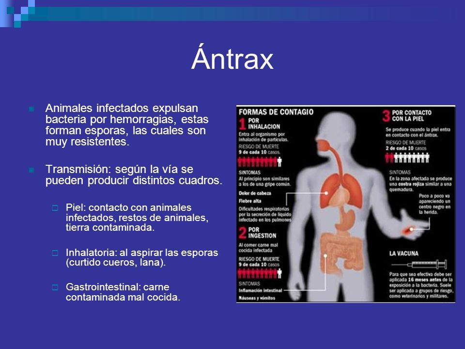Ántrax Animales infectados expulsan bacteria por hemorragias, estas forman esporas, las cuales son muy resistentes.