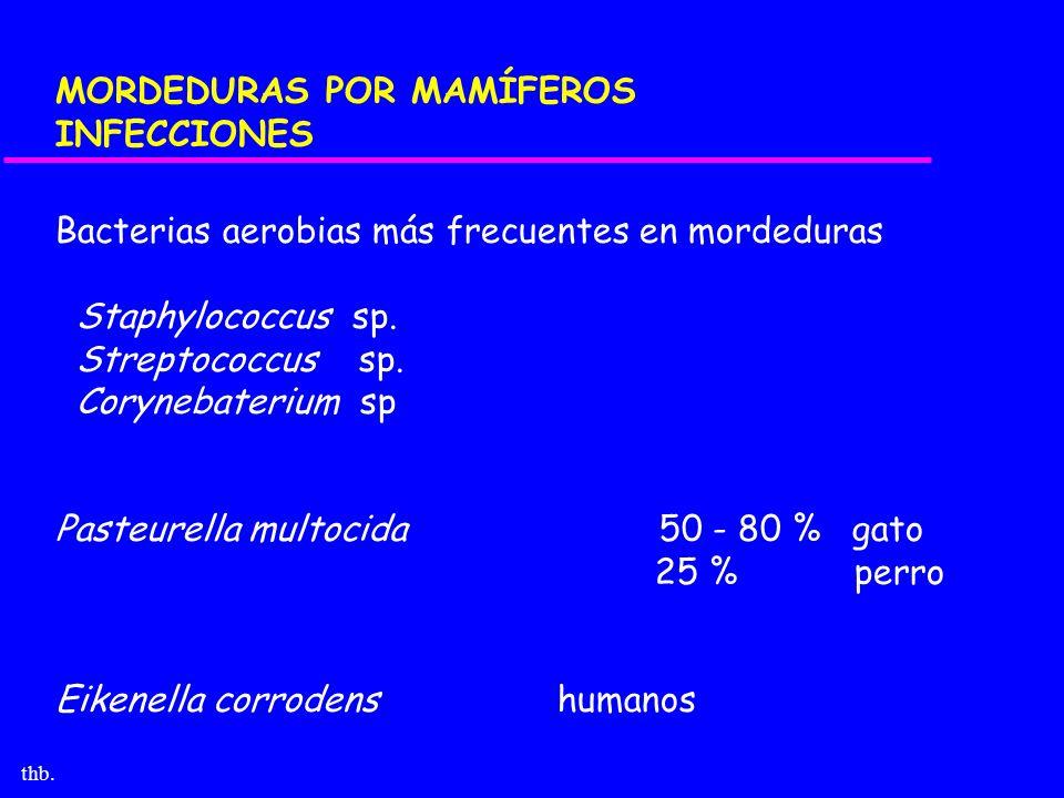 MORDEDURAS POR MAMÍFEROS INFECCIONES