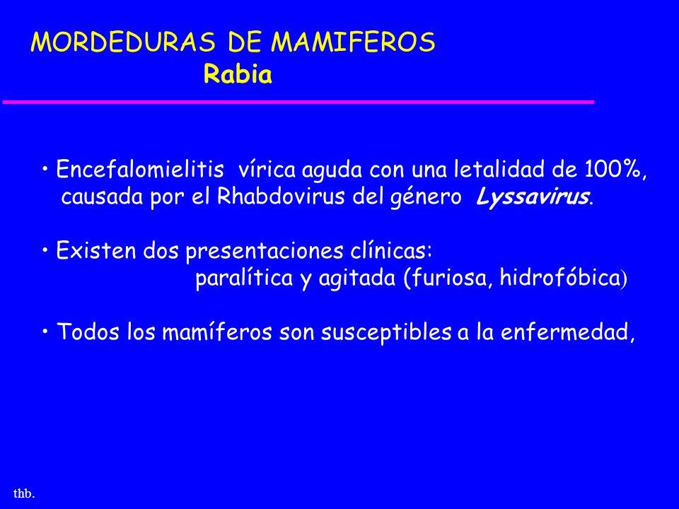 MORDEDURAS DE MAMIFEROS Rabia