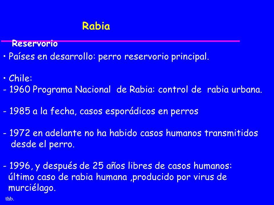 Rabia Reservorio Países en desarrollo: perro reservorio principal.