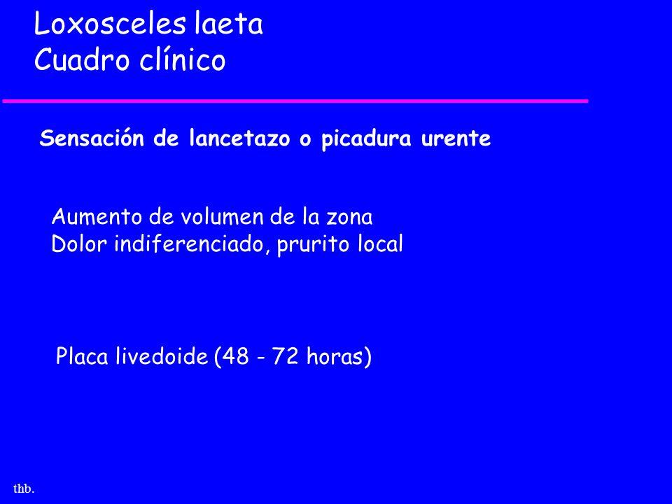 Loxosceles laeta Cuadro clínico