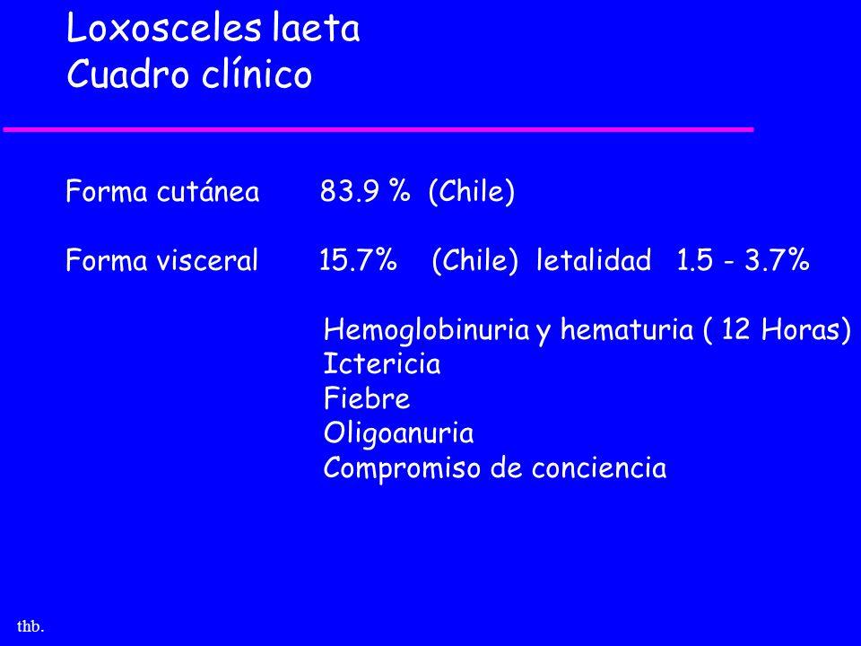 Loxosceles laeta Cuadro clínico Forma cutánea 83.9 % (Chile)