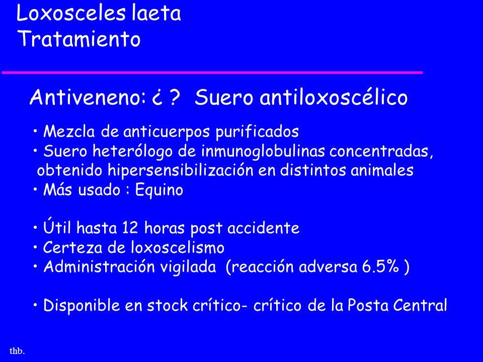 Antiveneno: ¿ Suero antiloxoscélico