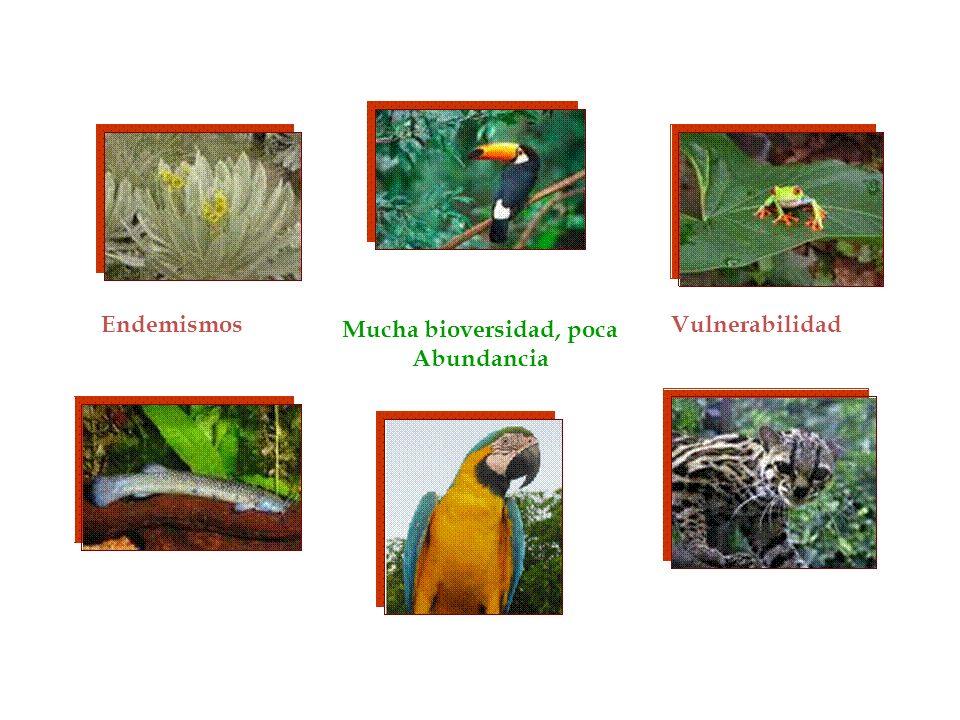 Mucha bioversidad, poca Abundancia