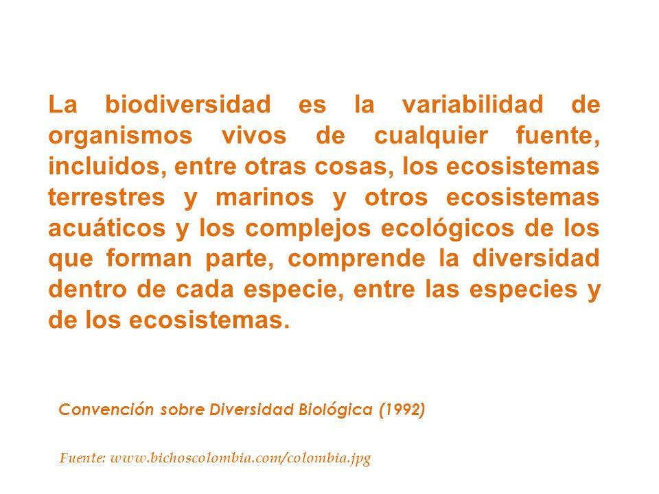 La biodiversidad es la variabilidad de organismos vivos de cualquier fuente, incluidos, entre otras cosas, los ecosistemas terrestres y marinos y otros ecosistemas acuáticos y los complejos ecológicos de los que forman parte, comprende la diversidad dentro de cada especie, entre las especies y de los ecosistemas.