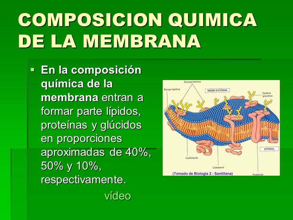 COMPOSICION QUIMICA DE LA MEMBRANA