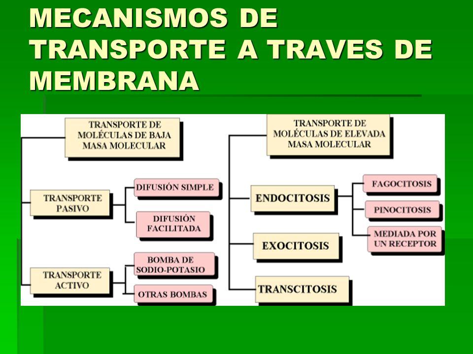 MECANISMOS DE TRANSPORTE A TRAVES DE MEMBRANA