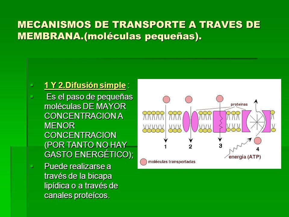 MECANISMOS DE TRANSPORTE A TRAVES DE MEMBRANA.(moléculas pequeñas).