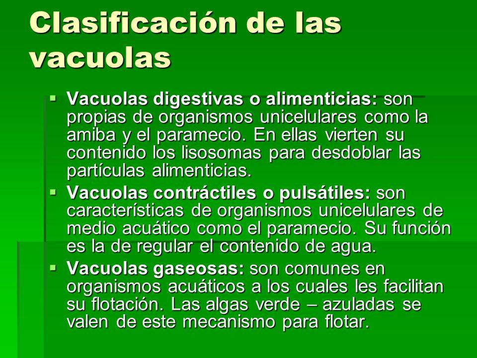 Clasificación de las vacuolas