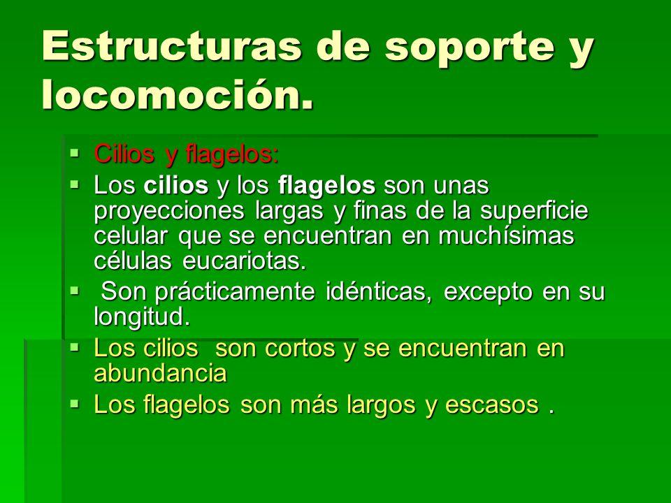 Estructuras de soporte y locomoción.