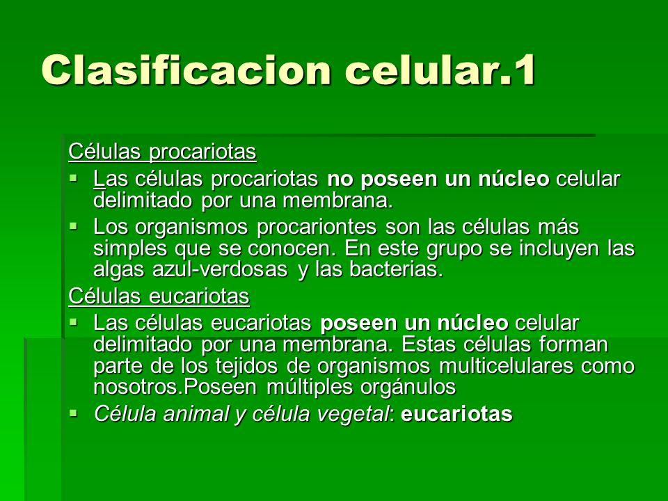 Clasificacion celular.1