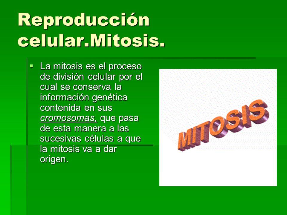 Reproducción celular.Mitosis.