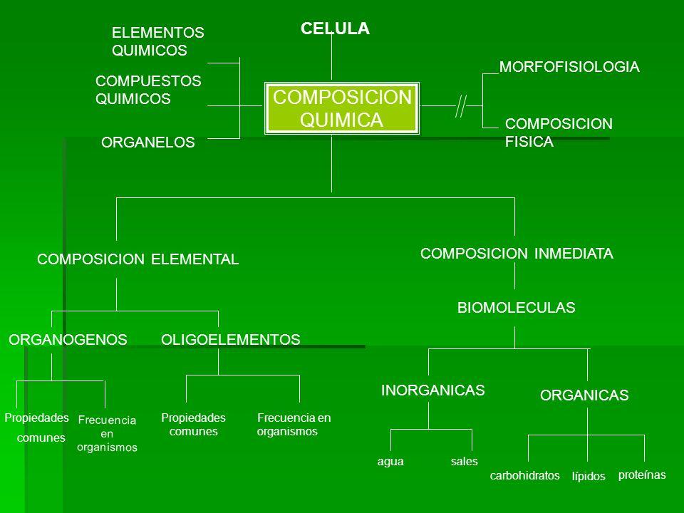 COMPOSICION QUIMICA CELULA ELEMENTOS QUIMICOS MORFOFISIOLOGIA