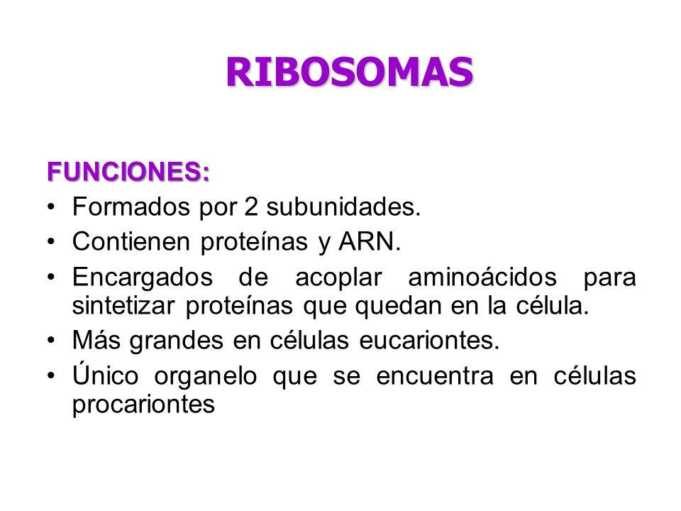 RIBOSOMAS FUNCIONES: Formados por 2 subunidades.