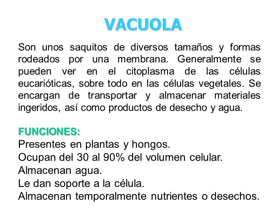 VACUOLA Presentes en plantas y hongos.