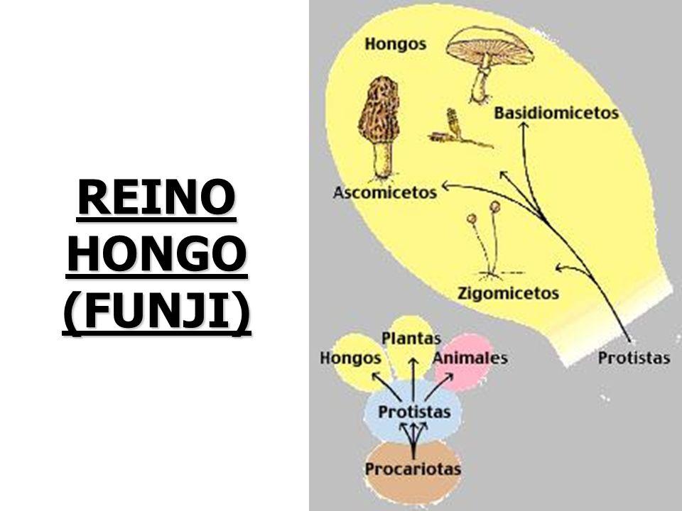 REINO HONGO (FUNJI)