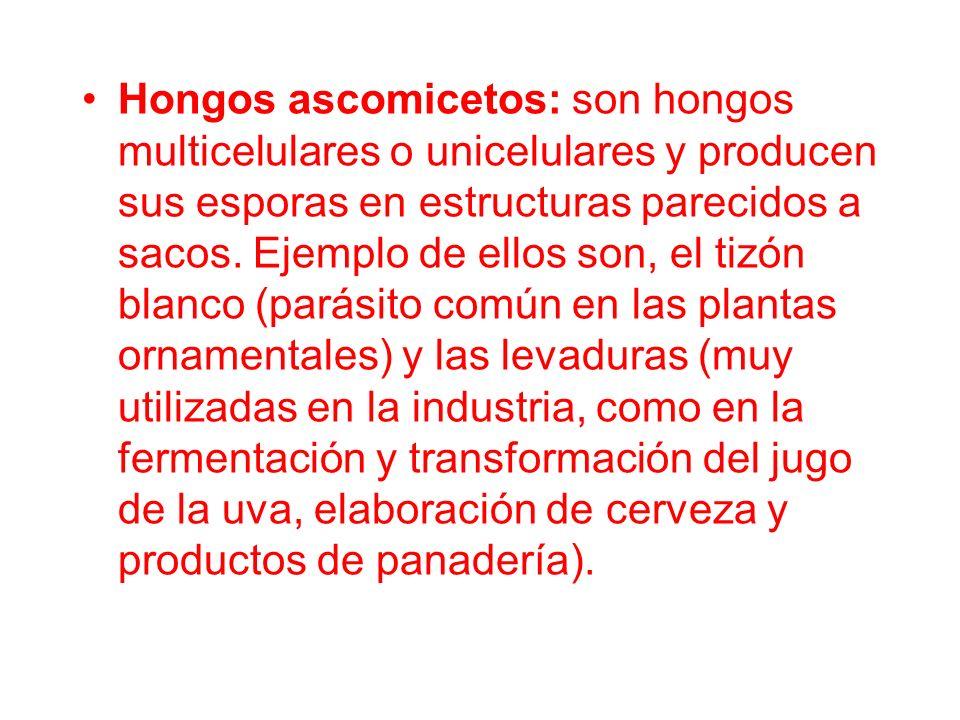 Hongos ascomicetos: son hongos multicelulares o unicelulares y producen sus esporas en estructuras parecidos a sacos.