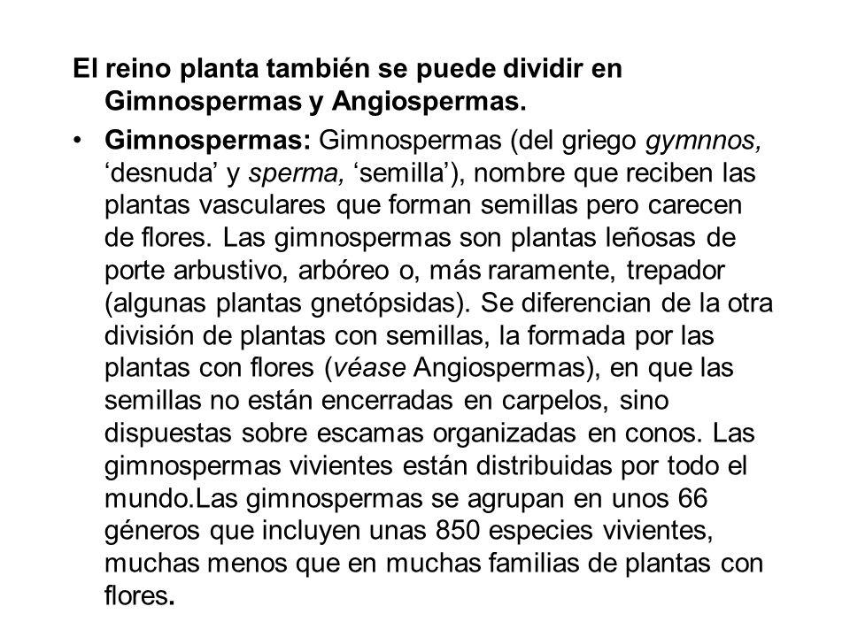 El reino planta también se puede dividir en Gimnospermas y Angiospermas.