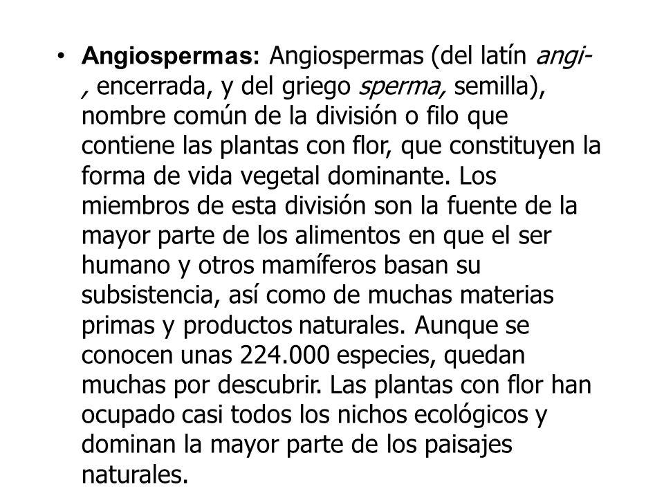 Angiospermas: Angiospermas (del latín angi-, encerrada, y del griego sperma, semilla), nombre común de la división o filo que contiene las plantas con flor, que constituyen la forma de vida vegetal dominante.
