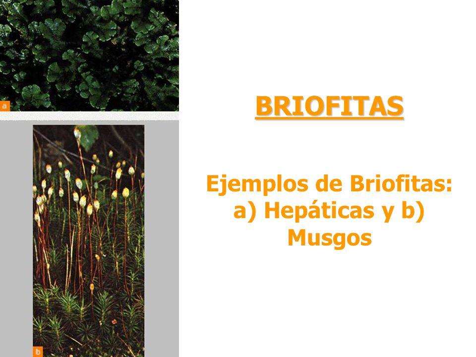 Ejemplos de Briofitas: a) Hepáticas y b) Musgos