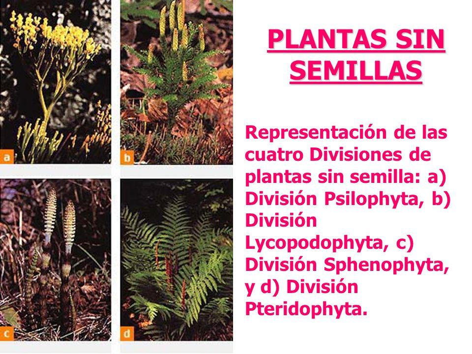 PLANTAS SIN SEMILLAS