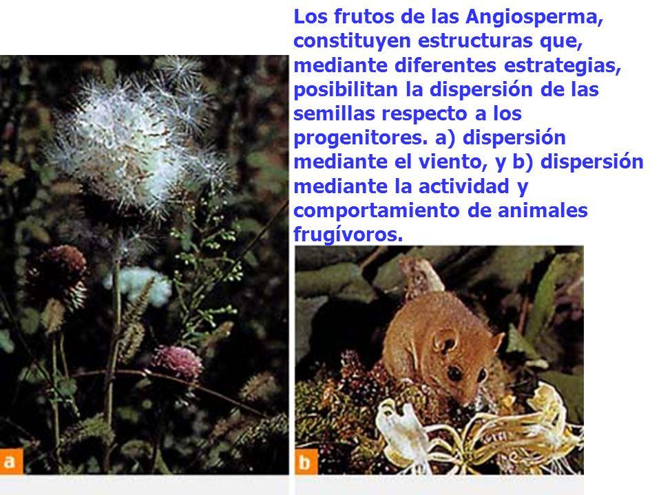 Los frutos de las Angiosperma, constituyen estructuras que, mediante diferentes estrategias, posibilitan la dispersión de las semillas respecto a los progenitores.