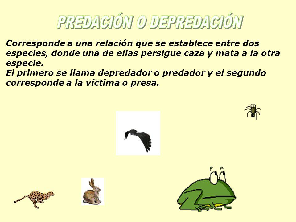 PREDACIÓN O DEPREDACIÓN