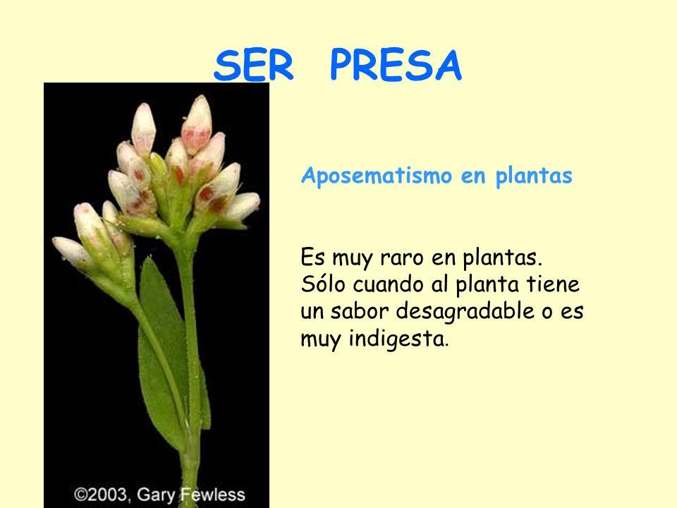 SER PRESA Aposematismo en plantas