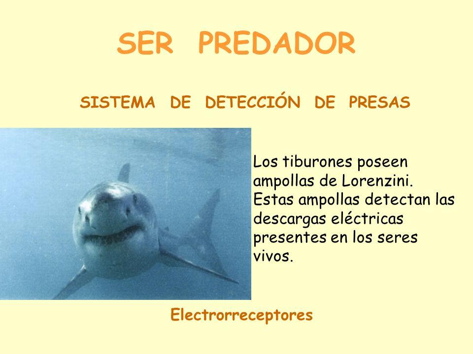 SER PREDADOR SISTEMA DE DETECCIÓN DE PRESAS