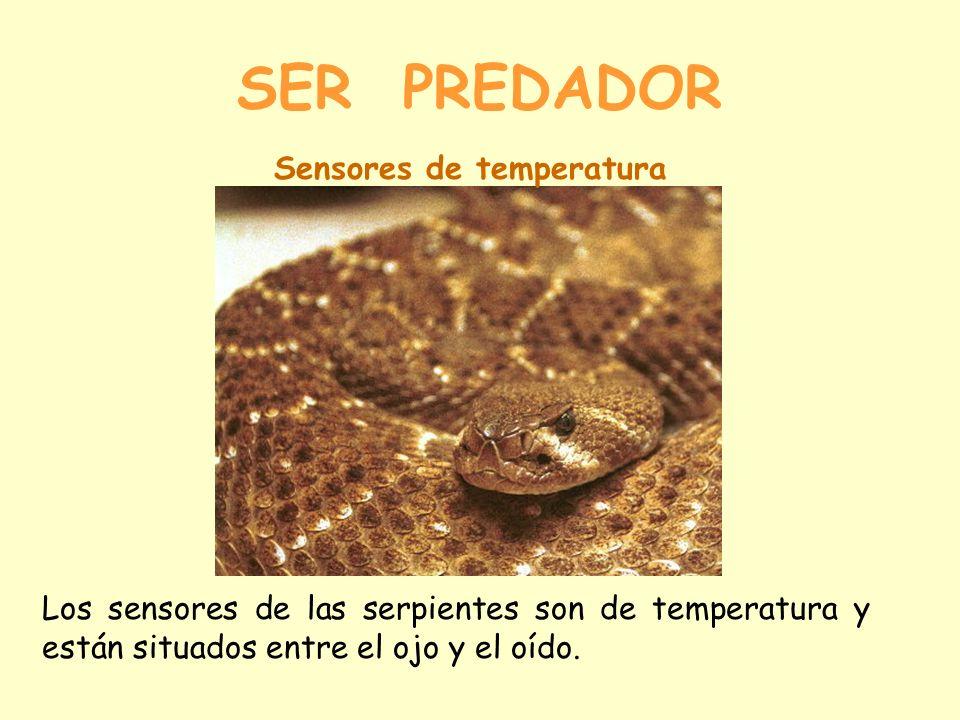 SER PREDADOR Sensores de temperatura