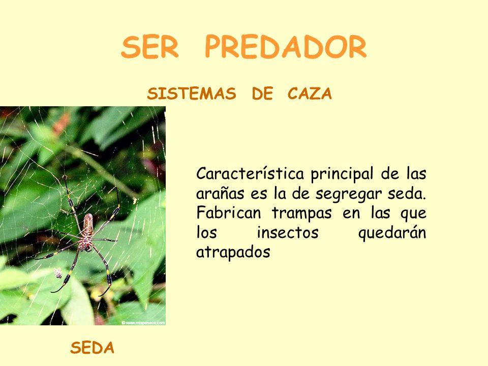SER PREDADOR SISTEMAS DE CAZA