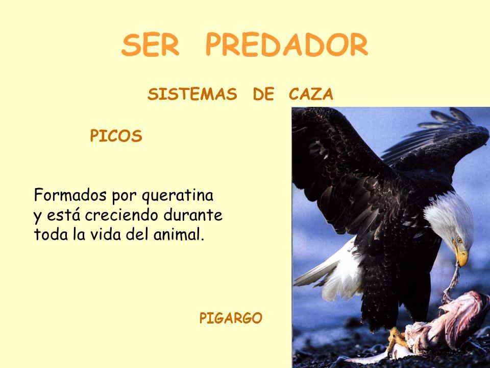 SER PREDADOR SISTEMAS DE CAZA PICOS