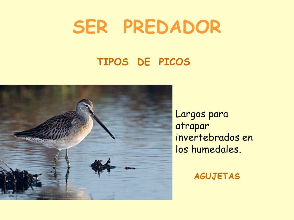 SER PREDADOR TIPOS DE PICOS