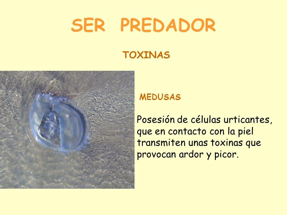 SER PREDADOR TOXINAS. MEDUSAS.