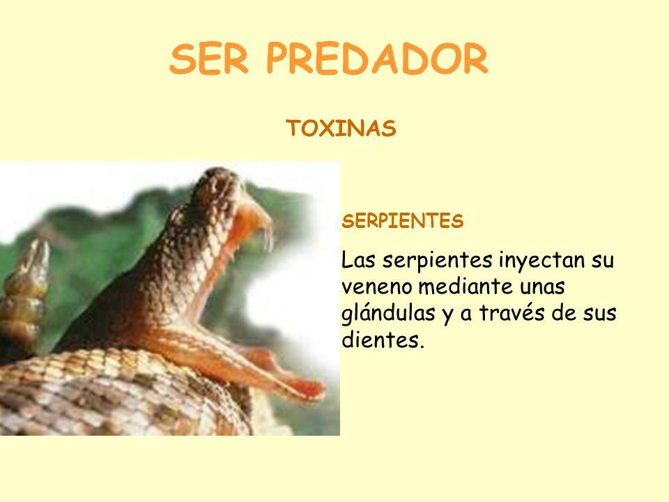 SER PREDADOR TOXINAS. SERPIENTES.
