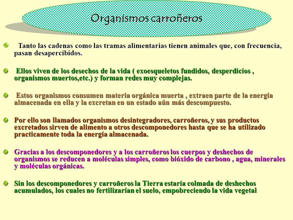 Organismos carroñeros