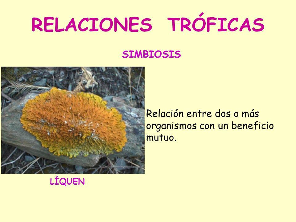RELACIONES TRÓFICAS SIMBIOSIS
