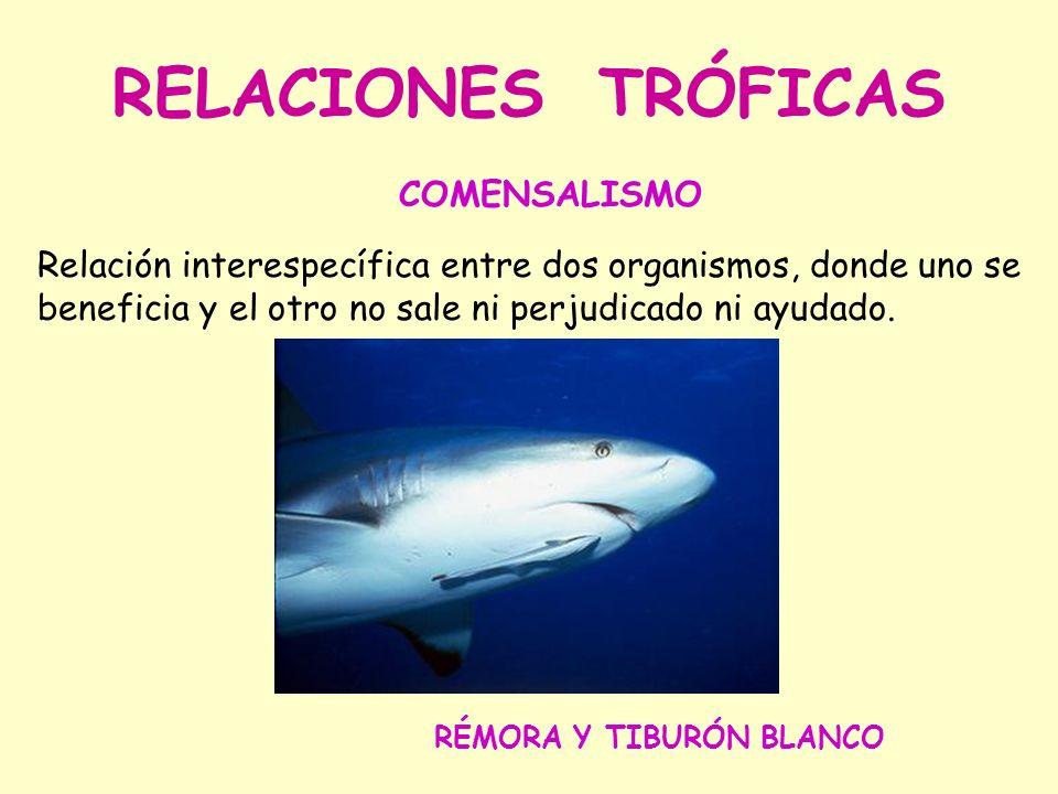 RELACIONES TRÓFICAS COMENSALISMO