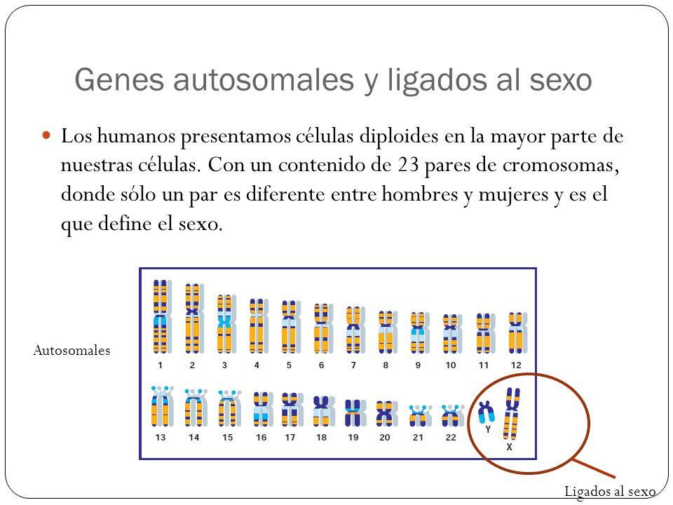 Genes autosomales y ligados al sexo